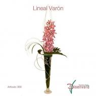 Orquídeas Lineal Varon