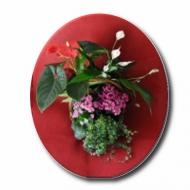 Canasta Flores y Plantas Principal