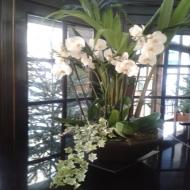 Composición Orquídeas Blancas